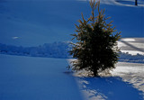 the littlest Christmas tree by solita17, Holidays->Christmas gallery