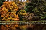 Autumn Blaze by LynEve, photography->landscape gallery