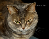 Grumpy Cat by tigger3, photography->pets gallery