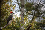 Woodpecker by Eubeen, photography->birds gallery