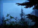 Misty Morning by LynEve, Photography->Landscape gallery