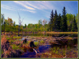 Swamp by noranda, Photography->Landscape gallery