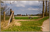 Zeeland Farming 06, Wolfphaartsdijk by corngrowth, photography->landscape gallery