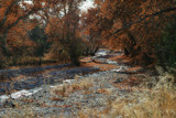 Whitewater Creek Flows Through the Sycamores by DesertDenizen, photography->landscape gallery