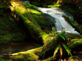 Stream Play by mayne, Photography->Waterfalls gallery