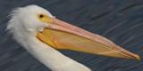 For Fun by garrettparkinson, photography->birds gallery