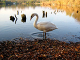 Posing Ashore by BernieSpeed, Photography->Animals gallery