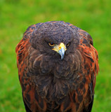 Watching by biffobear, photography->birds gallery