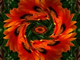 Swirling Gerberas by LynEve, photography->manipulation gallery