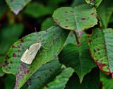 Unsure by biffobear, photography->butterflies gallery