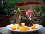Butterflies. by GIGIBL, photography->butterflies gallery