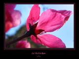 La Vie En Rose (RW) by jesouris, Rework gallery