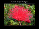 And The Rockets' Red Glare by Hottrockin, Photography->Flowers gallery