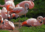 Pretty in Pink by biffobear, photography->birds gallery