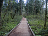 Walkway through a swamp by hamellr, Photography->Landscape gallery