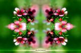 kolydoskope 1 by Samatar, Photography->Manipulation gallery