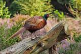 Bird by biffobear, photography->birds gallery