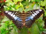 Butterflies Alive by PhotoPhreak, Photography->Butterflies gallery