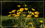 More Zoo Foofies by Jimbobedsel, Photography->Flowers gallery