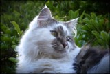 Emerald Eyes 5 years on by LynEve, photography->pets gallery