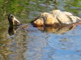 Surprise ! by Stuartclan, photography->reptiles/amphibians gallery
