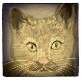 A Cat Named Groucho Marx by bfrank, illustrations gallery