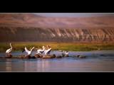 Flight School 101 by photoimagery, Photography->Birds gallery