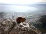 View from Table Mountain, South Africa by Crusader, photography->animals gallery
