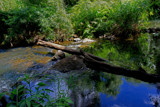 Creek Reflections by jeenie11, photography->general gallery