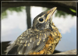 Soaking It's Feet 2 by Jimbobedsel, photography->birds gallery