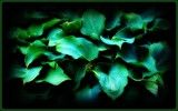 Shades on Green by TheWhisperer, photography->manipulation gallery