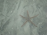 Starfish by pantherpsc, Photography->Shorelines gallery