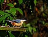 Keeping an eye out by biffobear, photography->birds gallery
