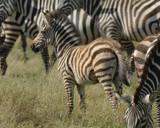 Fuzzy by garrettparkinson, photography->animals gallery
