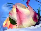 My Little Mermaid! by marilynjane, Photography->Flowers gallery