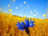Summerfield by Helge, Photography->Flowers gallery