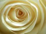 Into the Eye of a Rose by jessiniki, photography->flowers gallery
