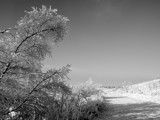 Winter's Walk by d_spin_9, Photography->Landscape gallery