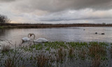 Lake Dusk by slybri, Photography->Birds gallery