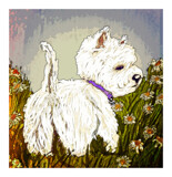 Westie by bfrank, illustrations gallery