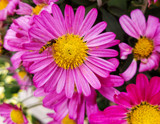 Buzzing Around by Pistos, photography->flowers gallery