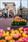 Amsterdam Tulip Festival 09 by corngrowth, photography->city gallery