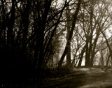 Spring Morning 2 by rriesop, Photography->Landscape gallery