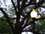 Lamppost and Tree by Hottrockin, Photography->General gallery