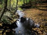 Fall Log by Lithfo, Photography->Landscape gallery