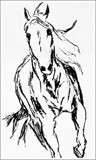 Charcoal Horse Sketch by bfrank, illustrations gallery