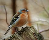 Well by biffobear, photography->birds gallery