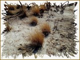 Parched & Tattered by mesmerized, photography->general gallery
