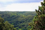 Tree Top Level by kidder, Photography->Landscape gallery