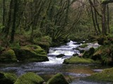 Woodland Stream #2 by Si, Photography->Landscape gallery
